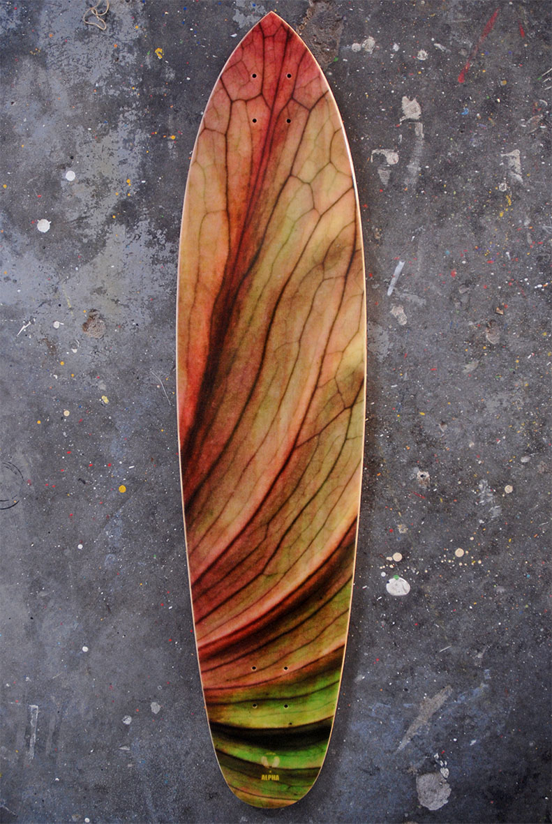 Roundtail Pintail art board by Mishal Weston